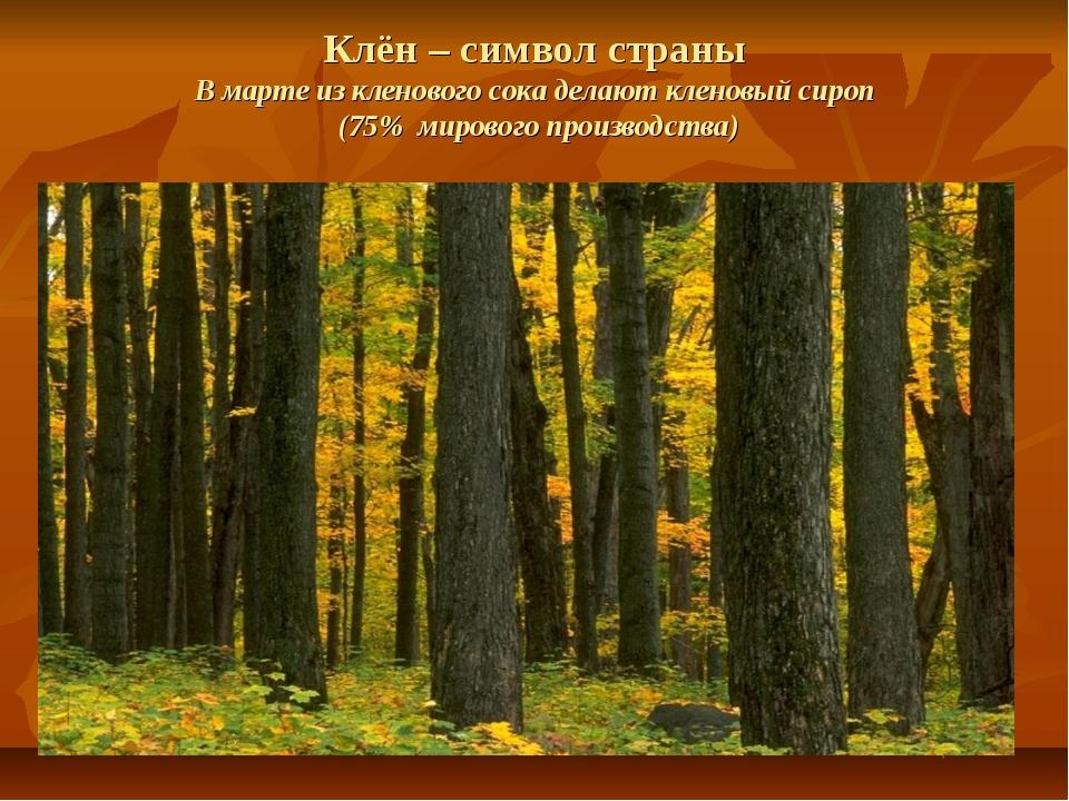 Клён – символ страны В марте из кленового сока делают кленовый сироп (75% мир...