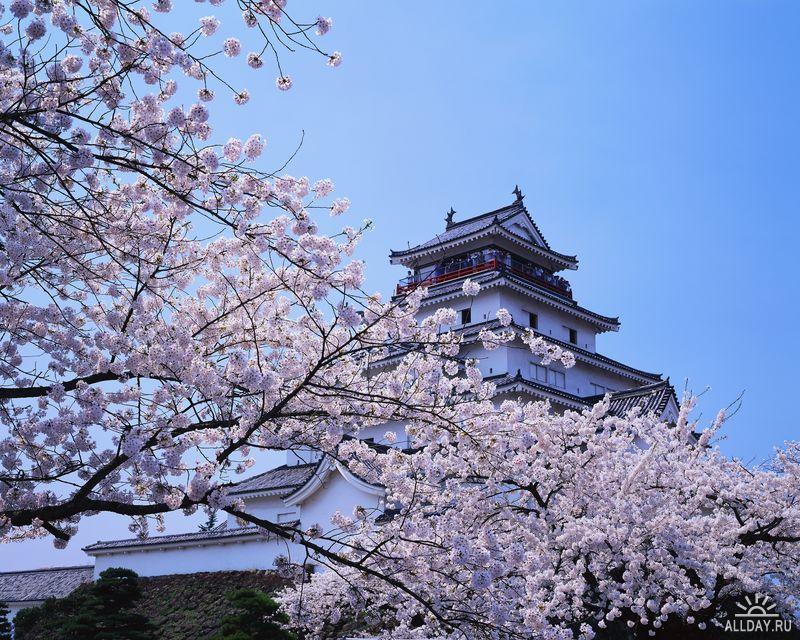 C:\Documents and Settings\Admin\Мои документы\Мои рисунки\картинки япония\1249929281_jla20018h.jpg