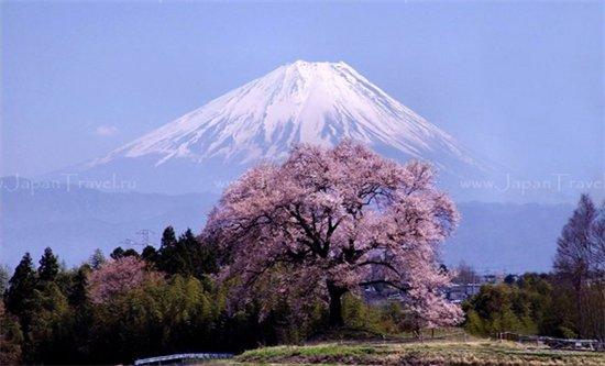 C:\Documents and Settings\Admin\Мои документы\Мои рисунки\картинки япония\43817123fa4b.jpg