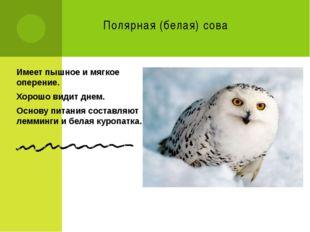 Полярная (белая) сова Имеет пышное и мягкое оперение. Хорошо видит днем. Осно