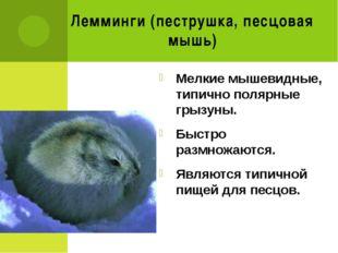 Лемминги (пеструшка, песцовая мышь) Мелкие мышевидные, типично полярные грызу