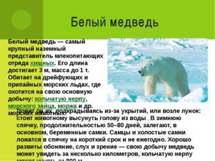 Белый медведь Белый медведь— самый крупный наземный представитель млекопитаю