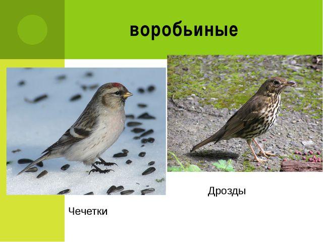 воробьиные Дрозды Чечетки