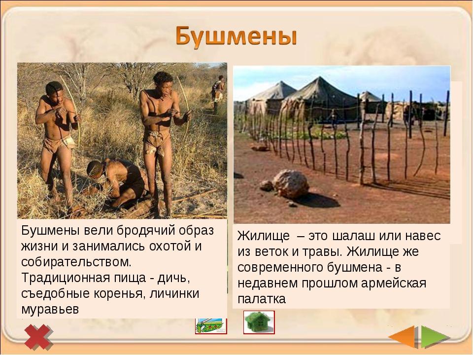 В пустынях и полупустынях Южной Африки живут бушмены. Сейчас их осталось немн...