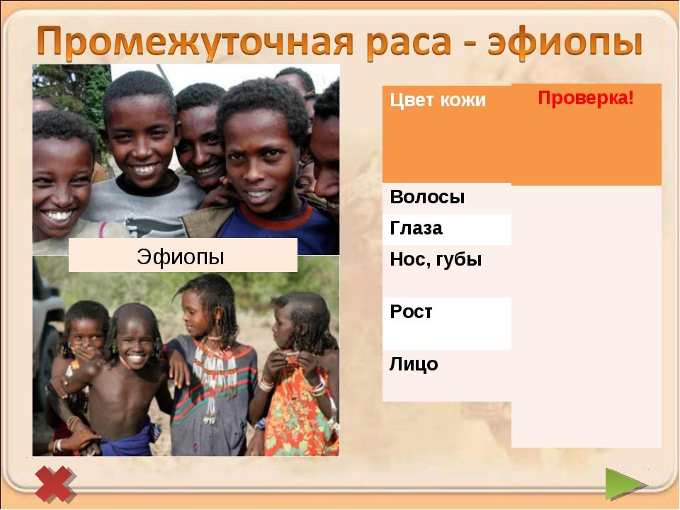 Эфиопы Цвет кожи Более светлая с красноватым оттенком Волосы Темный Глаза...