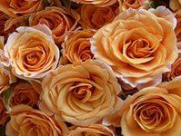 Купить чайные розы. . Букет из чайных роз - доставка