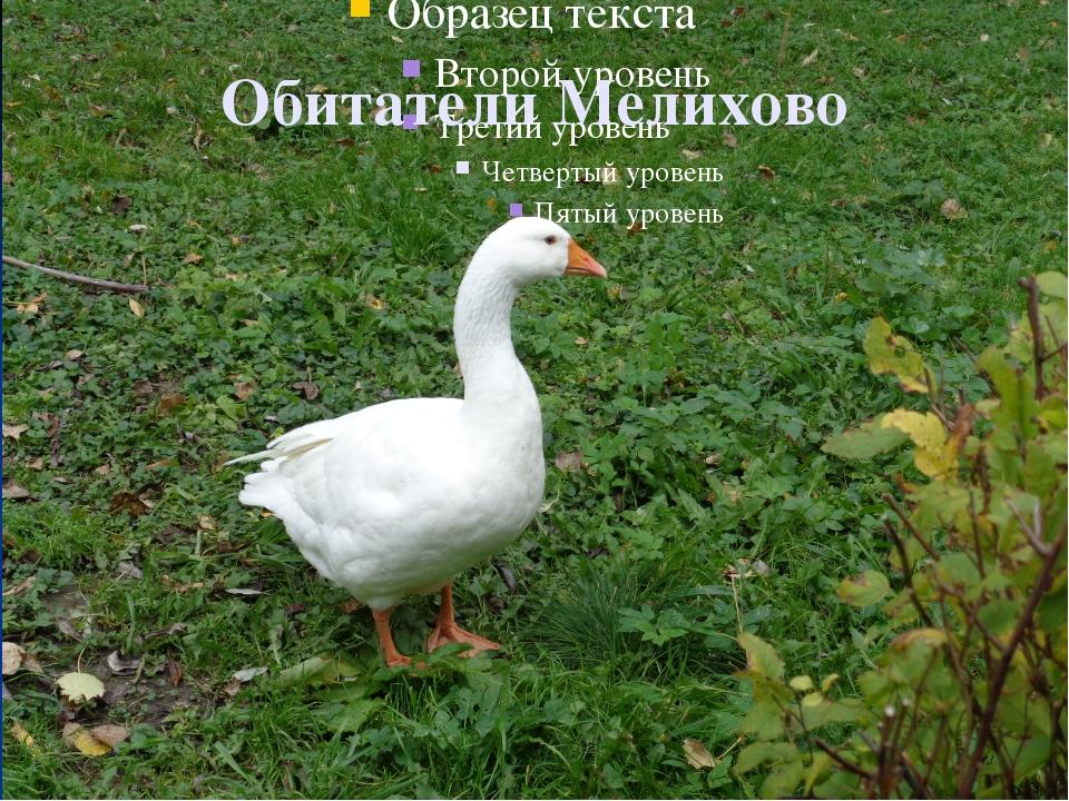 Обитатели Мелихово