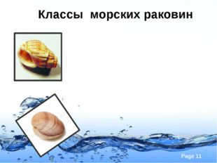 Классы морских раковин Page