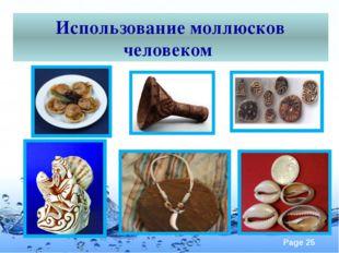 Использование моллюсков человеком Page
