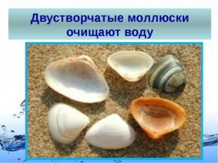 Двустворчатые моллюски очищают воду Page