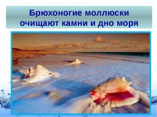 Брюхоногие моллюски очищают камни и дно моря Page