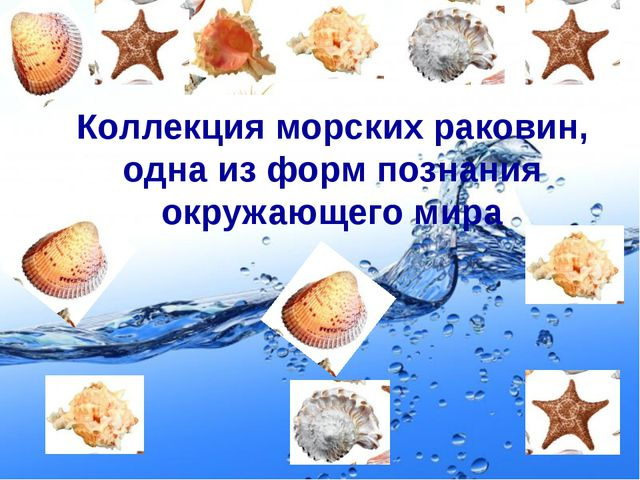 Коллекция морских раковин, одна из форм познания окружающего мира Page