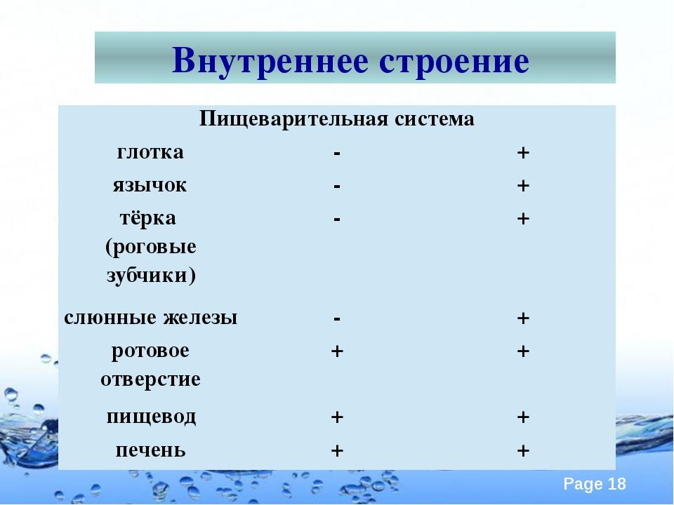 Внутреннее строение Пищеварительная система глотка - + язычок - + тёрка (рого...