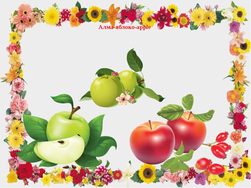 Алма-яблоко-apple