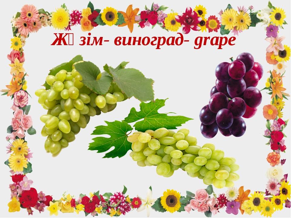 Жүзім- виноград- grape