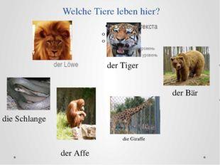 Welche Tiere leben hier? der Löwe der Tiger die Schlange der Affe der Bär die