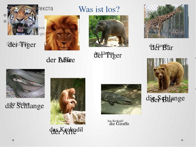 Was ist los? der Löwe der Tiger das Krokodil die Schlange der Affe der Bär de...