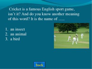an insect an animal a bird Cricket is a famous English sport game, isn't it?