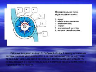 Образуя водяное кольцо 3. Рабочий объём 2 между лопатками ротора сначала уве