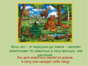 Весь лес – от верхушек до земли – заселён животными! Но животных в лесу меньш