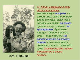 М.М. Пришвин «У птиц и зверьков в лесу есть свои этажи: мышки живут в корнях