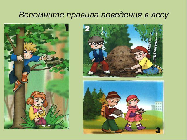 Вспомните правила поведения в лесу