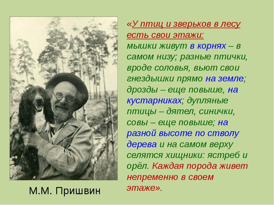 М.М. Пришвин «У птиц и зверьков в лесу есть свои этажи: мышки живут в корнях...