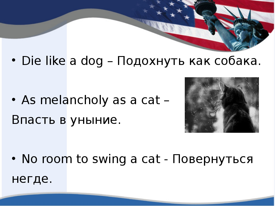 Die like a dog – Подохнуть как собака. As melancholy as a cat – Впасть в уны...
