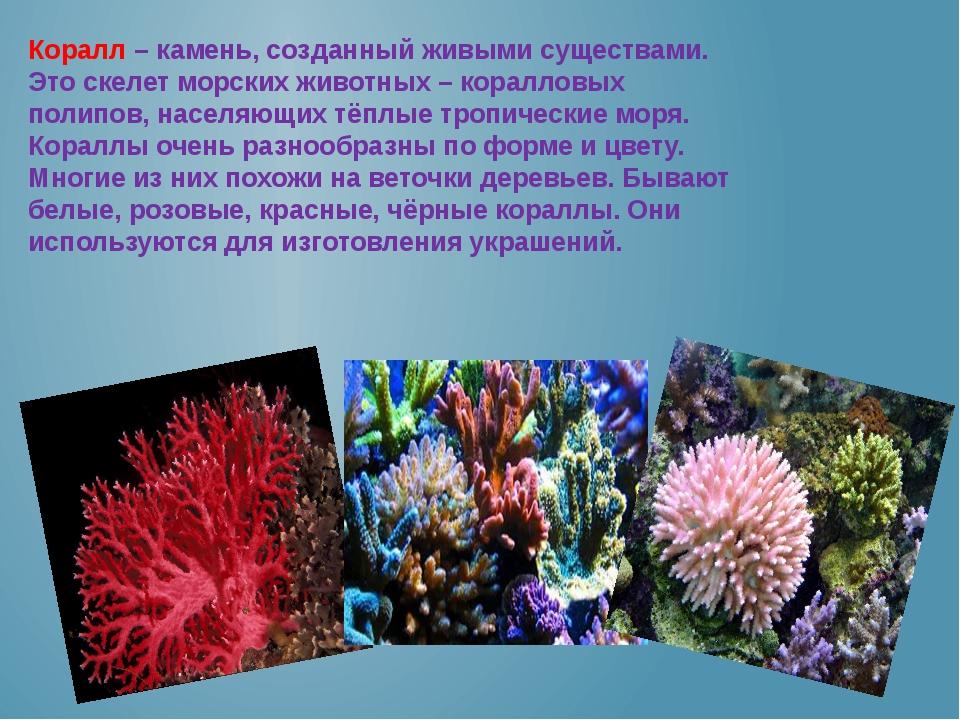 Коралл – камень, созданный живыми существами. Это скелет морских животных – к...
