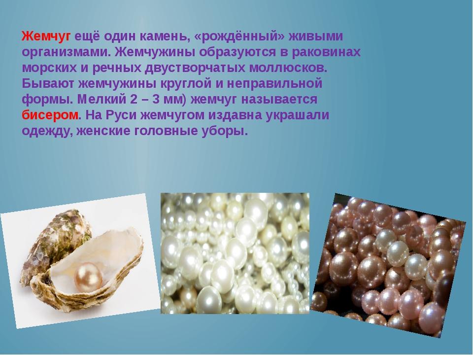 Жемчуг ещё один камень, «рождённый» живыми организмами. Жемчужины образуются...