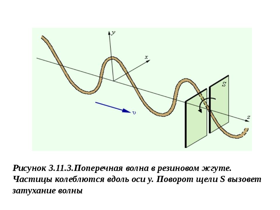 Рисунок 3.11.3.Поперечная волна в резиновом жгуте. Частицы колеблются вдоль о...
