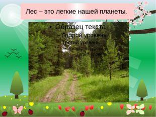 Лес – это легкие нашей планеты.