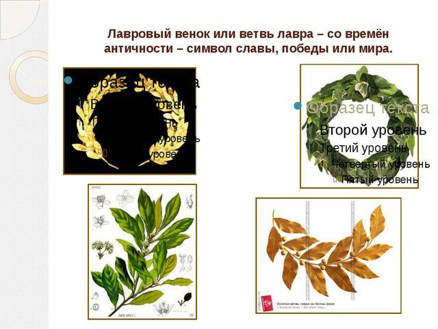 Лавровый венок или ветвь лавра – со времён античности – символ славы, победы...