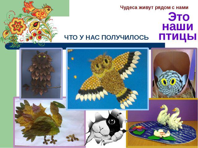 ЧТО У НАС ПОЛУЧИЛОСЬ Чудеса живут рядом с нами Это наши птицы