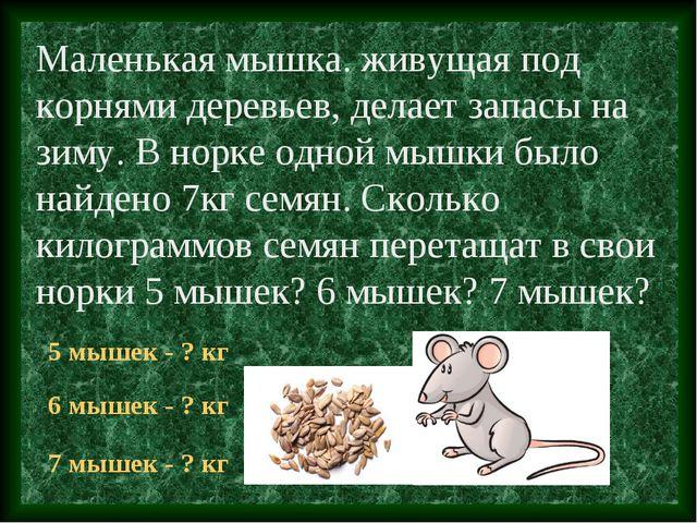 Маленькая мышка. живущая под корнями деревьев, делает запасы на зиму. В норке...