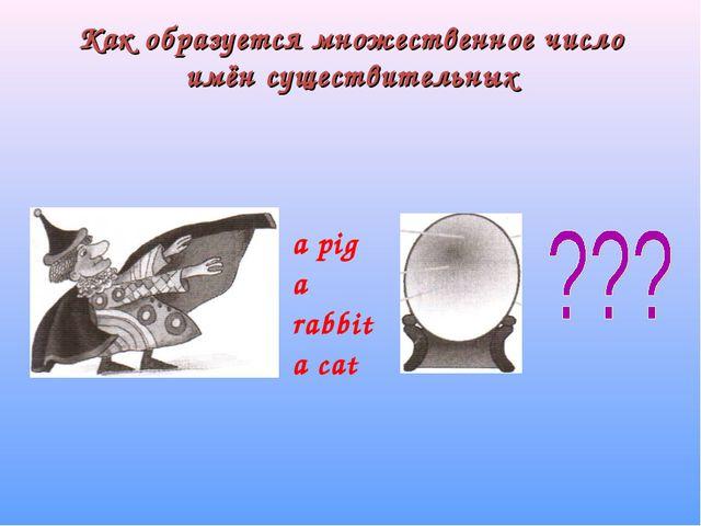 Как образуется множественное число имён существительных а pig а rabbit а cat