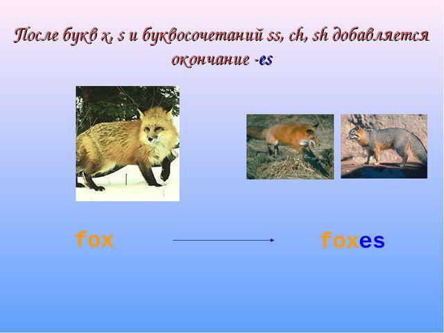 После букв x, s и буквосочетаний ss, ch, sh добавляется окончание -es fox foxes