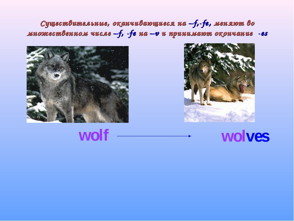 Существительные, оканчивающиеся на –f,-fe, меняют во множественном числе –f,...