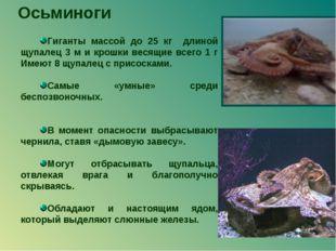 Осьминоги Гиганты массой до 25 кг длиной щупалец 3 м и крошки весящие всего 1