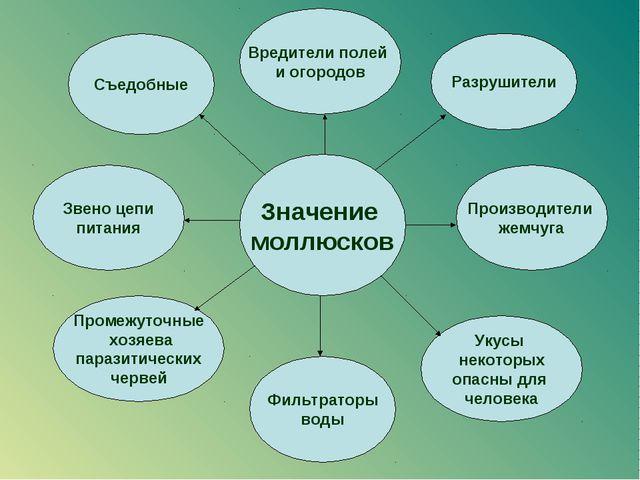 Значение моллюсков Съедобные Вредители полей и огородов Разрушители Укусы нек...