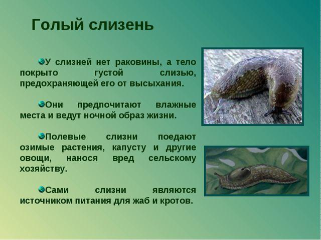 Голый слизень У слизней нет раковины, а тело покрыто густой слизью, предохран...