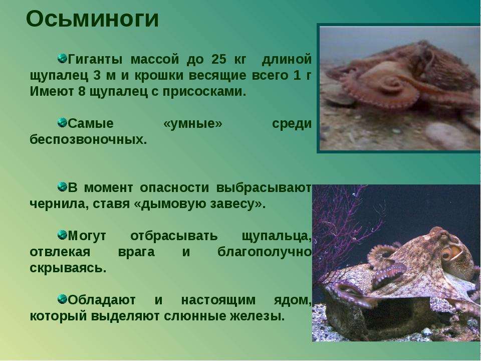Осьминоги Гиганты массой до 25 кг длиной щупалец 3 м и крошки весящие всего 1...