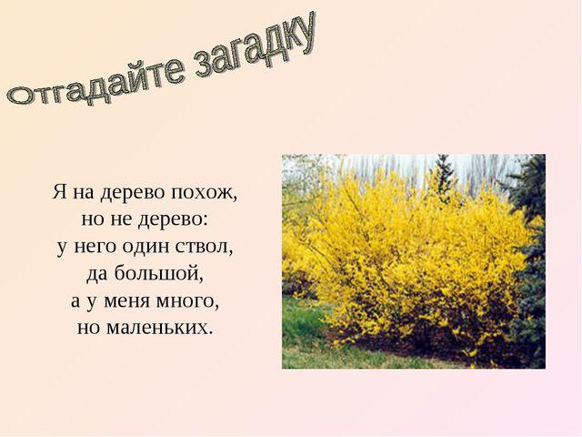Доклад по биологии 6 класс на тему кустарники