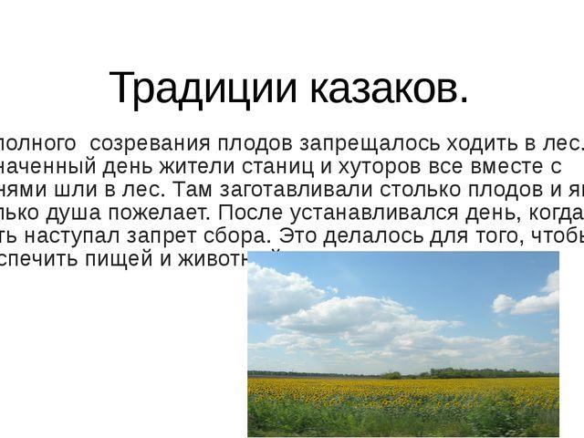 Традиции казаков. До полного созревания плодов запрещалось ходить в лес. В на...