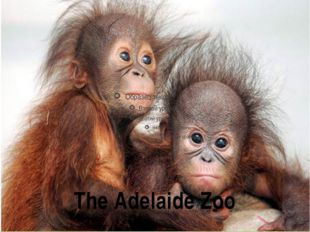 The Adelaide Zoo