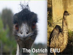The Ostrich EMU