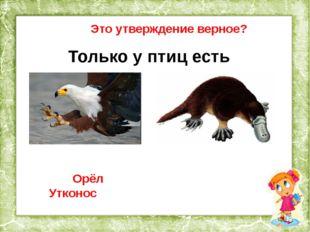 Это утверждение верное? Только у птиц есть хвост. Глухарь Окунь