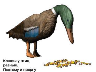 С помощью клюва птицы плетут гнёзда, чистят перья, кормят птенцов.