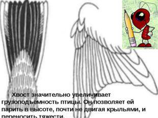 Всё тело у птиц покрыто перьями. Ни у каких других животных перьев нет. Перь
