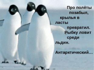 Пингвин не может летать. Крылья использует, как ласты, в воде и под водой. С